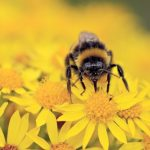 Construction Urged to Do More for Butterflies and Bees
