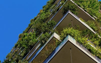How the Transition to Green Construction Drives Business Growth