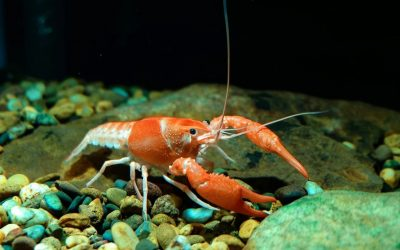 Lobster shells inspire stronger 3D-printed concrete