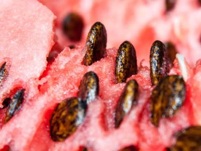 افزایش مقاومت بتن با استفاده از دانه هندوانه